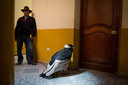 A condor caretaker stands guard next to a female condor inside of the town's municipal building during Yawar Fiesta (Feast of Blood) celebrations in the Andean town of Coyllurqui, in Apurimac, Peru. This condor was one of two captured for the town's celebration in 2013. This Peruvian tradition, that takes place annually in July during the Independence day celebrations, consists of capturing a condor or condors and parading them around town for about a week. The highlight of the tradition is a bullfight with the condor strapped on top of the bull. For locals, the bull represents the Spanish and the condor the native population. The condor is freed after the festivities in a ceremony called Cacharpari.