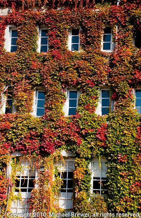 Ivy-covered windows on a building in Normandy, France