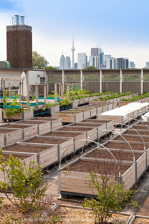 Eastdale School Grown Rooftop Garden