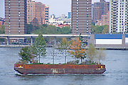 Robert Smithson's barge with tree floating in the East River Manhattan NY USA
