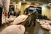 Mar 4, 2006; Tokyo, JPN; Tsukiji.Buyers load their recently purchased frozen tuna on to a cart at the Tsukiji Fish Market...After tuna is caught, it is flash frozen at sea to keep it fresh until it is brought to the market to be sold...Photo credit: Darrell Miho