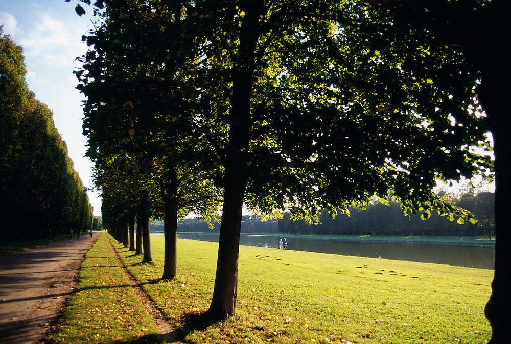 France, Palace of Versailles, Le Parc, tree in a row with pathway.