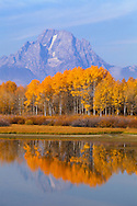 The fall colors of Aspen contrast the blue hues of the Tetons, Grand Teton National Park