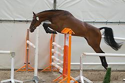 94 - Duizendschoon<br /> KWPN Paardendagen 2011 - Ermelo 2011<br /> © Dirk Caremans
