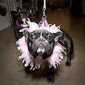 2011 Badger Kennel Club Fair