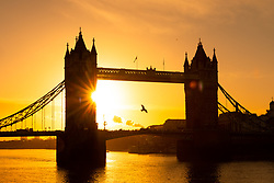 © Licensed to London News Pictures. 22/01/2019. London, UK.  A bird flies in front of Tower Bridge during sunny and cold weather as commuters make their way to work this morning.  Photo credit: Vickie Flores/LNP