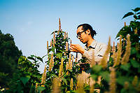 Daniel Nguyen from Song Cai Distillery picks herbs in the far reaches of northern Vietnam.