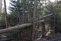fallen tree trunks in the forest