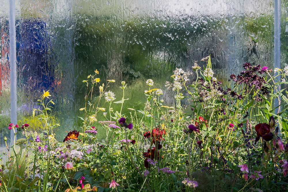 The RNIB garden. The Chelsea Flower Show 2014. The Royal Hospital, Chelsea, London, UK