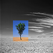 Dune Series Photographs