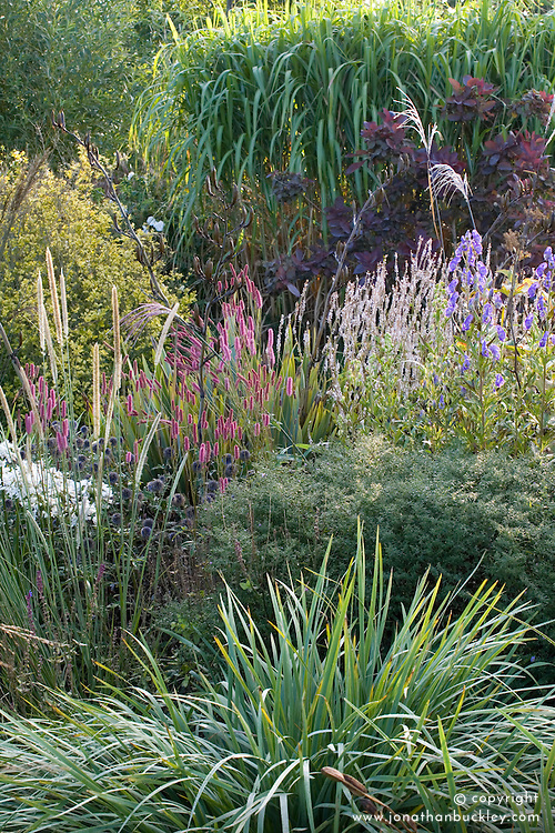 Border of late flowering perennials and grasses at Marchants.