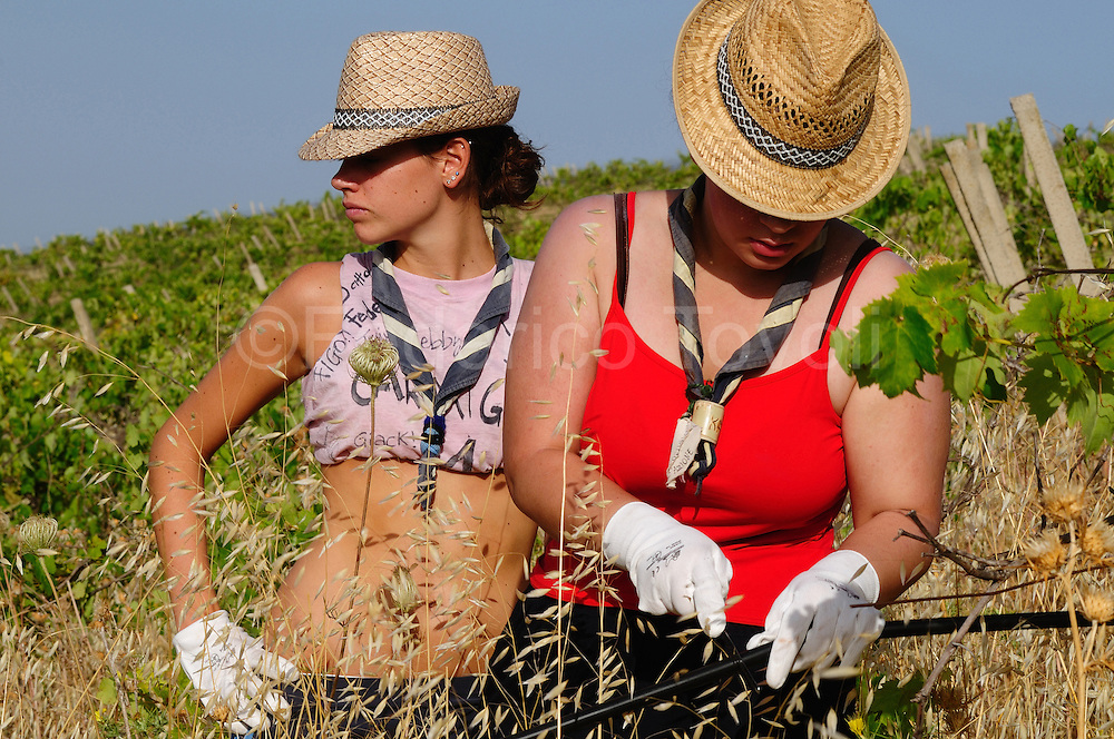 Volounteers at work on the fields confiscated to Mafia and now managed from cooperatives of Libera Terra