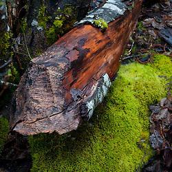 Log and Mossy Rock at Diablo Lake, North Cascades National Park, Washington, US