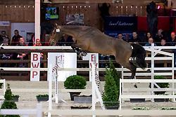 075, Crodino Van Den Bosrand Z<br /> BWP Hengstenkeuring -  Lier 2020<br /> © Hippo Foto - Dirk Caremans<br />  18/01/2020