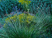 Berkeley, California, residential landscape, mixed plantings for beauty and low rainfall
