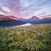 sinopah mountain wild flowers glacier national park blackfeet reservation