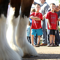 Twin brothers Levi and Jack Britt, 7, of Tupelo stand with their sister Alli, as they view The World Renowned Budweiser Clydesdales as they visit Tupelo's Fairpark on Friday before making  deliveries to downtown restaurants Friday afternoon.