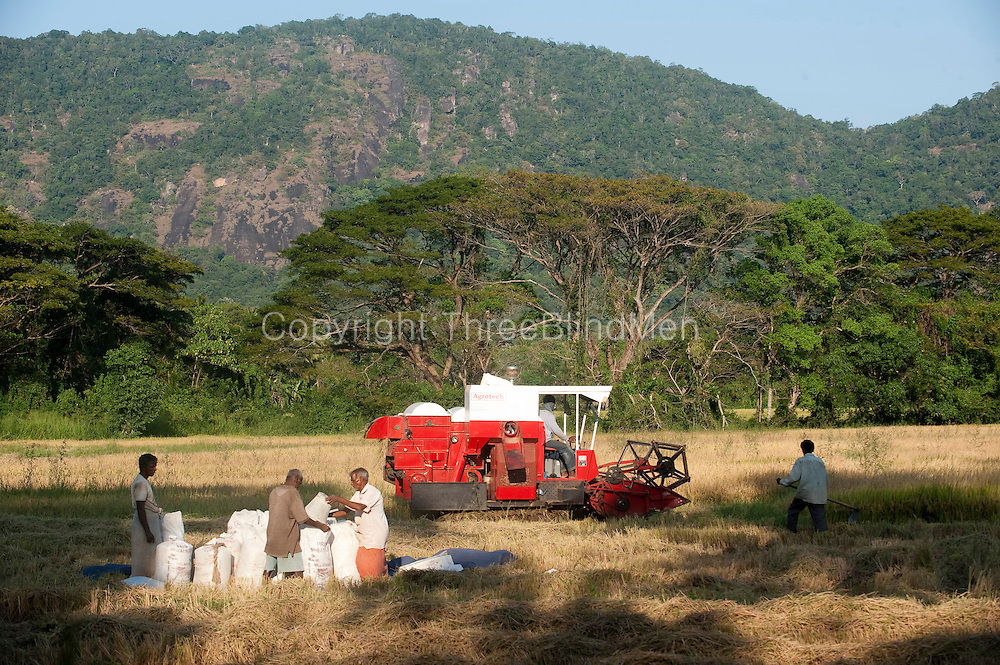 Combine harvester at work on paddy field. Buttala - Kataragama road. February 2010.