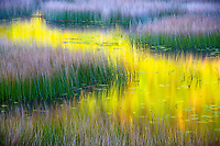 Gorgeous fall color reflecting in the calm waters of a marsh in Acadia National Park, Maine.