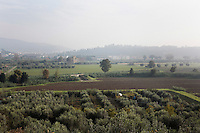 CALENZANO, ITALY - 24 NOVEMBER 2014: A view of the olive tree field (bottom half of image) of olive oil producer Federico Dufour is here by olive trees in his property in Calenzano, 20 kilometers north of Florence, Italy, on November 24th 2014.<br /> <br /> The olive harvest was practically non-existent this fall in Calenzano because of the Bactrocera oleae, an olive fruit fly that this year ravaged entire olive crops. Italy's Institute of Services for Agriculture and Food Market, or ISMEA, calculated that olive oil production fell on average by 35 percent from 302,000 tons from 463,000 the previous year.