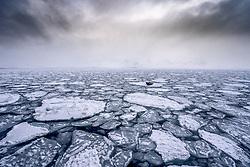 Bearded seal (Erignathus barbatus) on sea ice in en of March, Svalbard, Norway