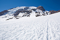 The path up the Muir snow field on Mt. Rainier, Mt Rainier National Park, Washington, United States.