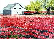 "Tulip fields with barn. LaConner, WA. Watercolor. 12x16"". ©JoAnn Hawkins."