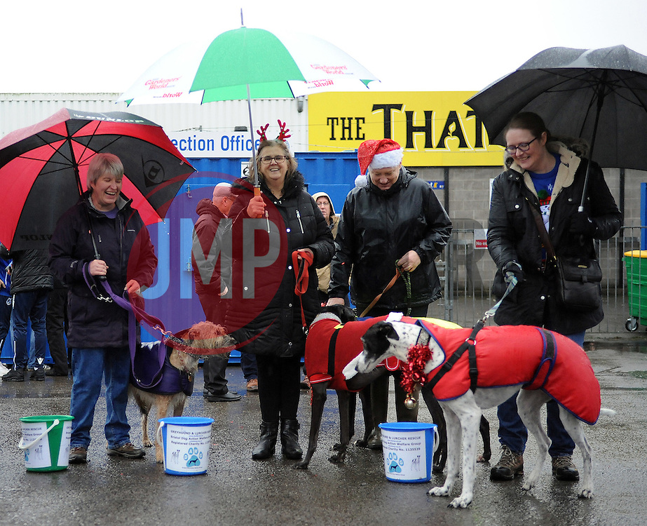 Bristol Greyhound and Lurcher Rescue - Mandatory by-line: Neil Brookman/JMP - 10/12/2016 - FOOTBALL - Memorial Stadium - Bristol, England - Bristol Rovers v Bury - Sky Bet League One