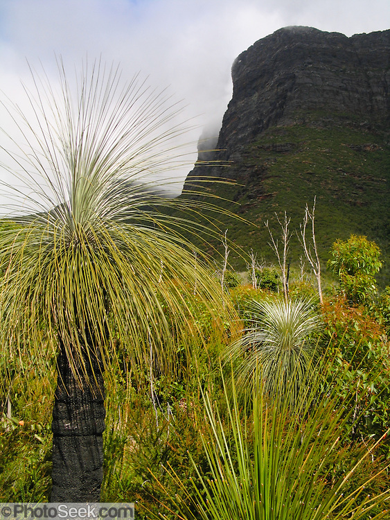 "Bluff Knoll rises to 1099 metres (3606 feet) above sea level in the Stirling Range in Western Australia. Bluff Knoll is one of only a few places to receive regular snowfalls in most years in Western Australia (WA). Its aboriginal name Koikyennuruff describes the ""place of ever-moving about mist and fog."" Stirling Range National Park was declared in 1913 and is now an ecological island in a sea of farmland. 1500 species of flora are packed within the park, more than in the entire British Isles. 123 orchid species grow here. 87 plant species found in the Stirling Range occur nowhere else on earth. The Stirling Range was born from river delta sediments deposited 1800-2000 million years ago (Palaeoproterozoic), then metamorphosed weakly into sandstone, quartzite, and shale rocks and deformed more than 1200 million years ago. Buried deep in the Earth's crust, today's Stirling Range was gradually exposed by weathering and erosion over time. Bluff Knoll is 337 km (4.5 hours drive) southeast of Perth and 100 km northeast of Albany via Chester Pass Road. An ideal time to visit is late spring and early summer (October to December), when days are beginning to warm up and the wildflowers are at their best. Winter, between June and August, is cold and wet. Allow three to four hours  to complete 5 km round trip on the Top Trail."