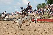 bucking horse propels rodeo rider into mid-air at the Hellensville Rodeo, Auckland, New Zealand