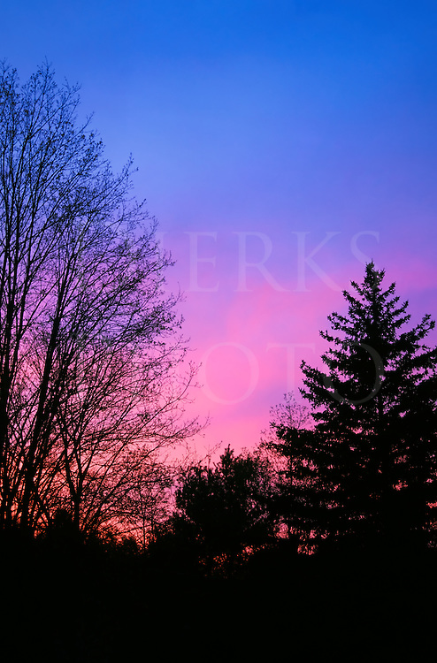 A spring sunset with silhouetted black trees against a pink and purple sky, Pennsylvania, PA, USA.
