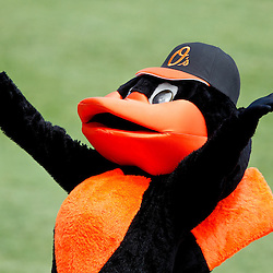 March 24, 2012; Sarasota, FL, USA; Baltimore Orioles mascot during the bottom of the third inning of a spring training game against the Washington Nationals at Ed Smith Stadium.  Mandatory Credit: Derick E. Hingle-US PRESSWIRE