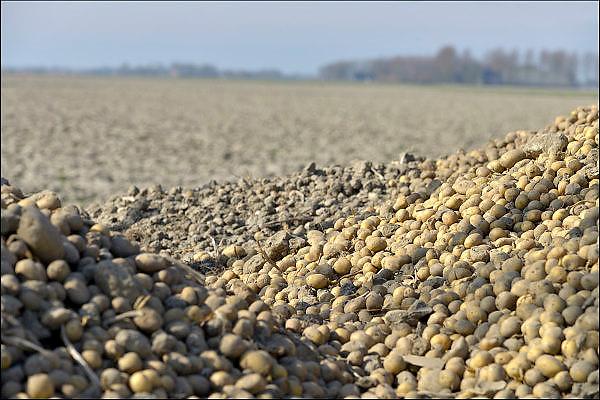 Nederland, Groningen, 15-4-2015Een berg pootaardappelen ligt klaar naast een akker om in de grond gestopt te worden.FOTO: FLIP FRANSSEN/ HOLLANDSE HOOGTE