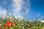 Spring flowers blooming on a blue sky background