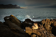 At this rocky point lay dozens of sleepy seals, young and old, enjoying the evening sunlight and soaking up the warm rays. The fish are bountiful here and I watched two of the seals play with fish before devouring them. This pup was so chilled that I was within a few feet of him before he even raised an eyebrow. I'd loved to have seen the Southern Right Whales this bay is famous for, but sadly we were there in the wrong season.