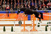 Estinov H<br /> KWPN Hengstenkeuring 2012<br /> © DigiShots