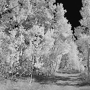 North Lake Road View - Infrared Black & White