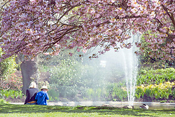 © Licensed to London News Pictures. 16/04/2014. Cliveden, UK. A woman and boy sit under cherry blossom. People enjoy the   sunshine at Cliveden in Buckinghamshire today 16th April 2014. Photo credit : Stephen Simpson/LNP