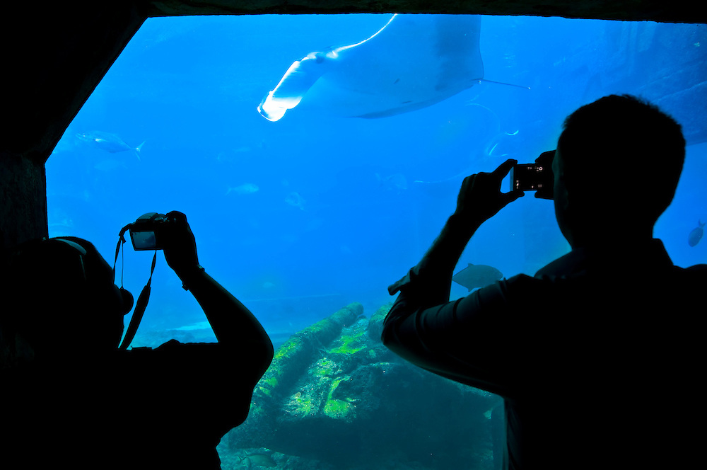 Visitors taking  pictures in aquarium, in the caribbean.