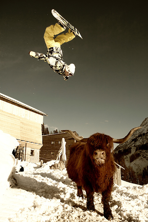 Backflip over Highland Cattle