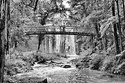 whangarei falls black and white