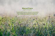 Marvel Farm
