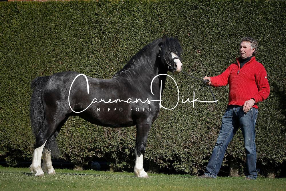 Welsh horse<br /> © Dirk Caremans