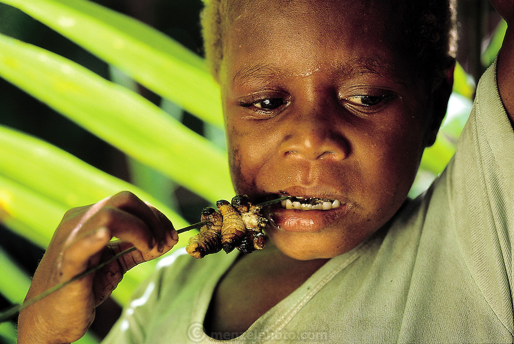 An Asmat child eats a roasted sago grub (Rhynchophorus ferrugineus, the larvae of Capricorn beetles), cooked by his father in the jungle swamp where his family is processing its main staple food?sago pulp?from the sago palm tree in southernmost Irian Jaya, Indonesia. When roasted on a spit, sago grups are fatty and bacon-flavored, although the skins are rather chewy. (Man Eating Bugs page 69 Top)