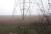 Thorny plants in the foreground near an electricity pylon behind one foggy morning on Botany Marshes, Swanscombe, Kent