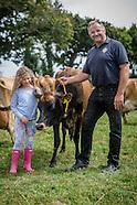 Heford cow