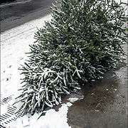 You know when Christmas is over then you see Christmas trees on the sidewalk on the street.