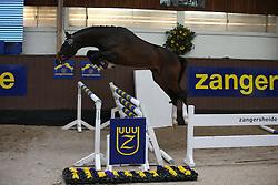 024, Here I Am Z<br /> Voorjaarshengstenkeuring Zangersheide 2016<br /> © Hippo Foto - Counet Julien