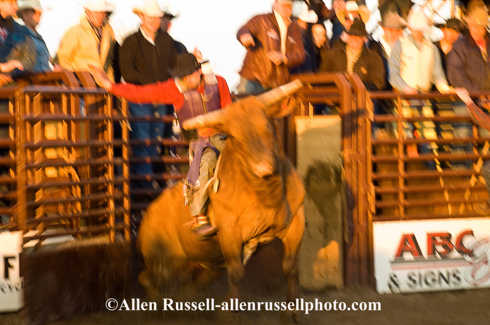 Bull Rider, Miles City Bucking Horse Sale, Montana, blurred motion, MODEL RELEASED on rider only