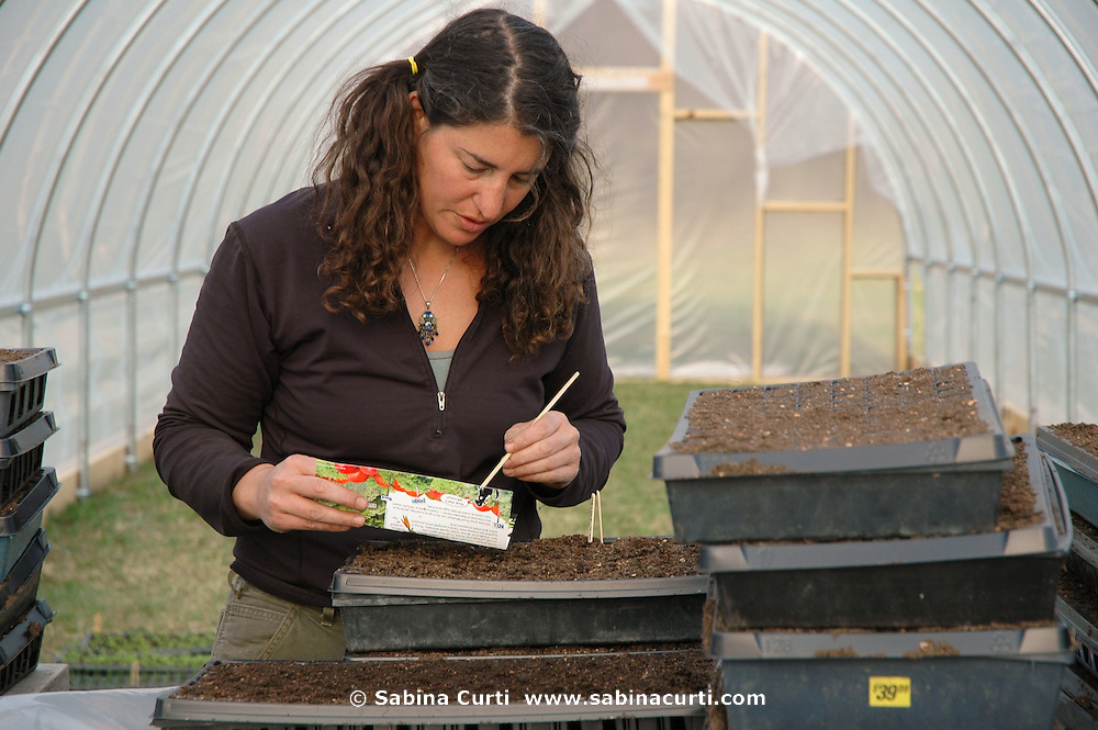 Farm Girl Farm CSA, sustainable community supported agriculture. Laura Meister starting seeds in her new greenhouse at Farm Girl Farm, North Egremont, MA, Spring 2006.